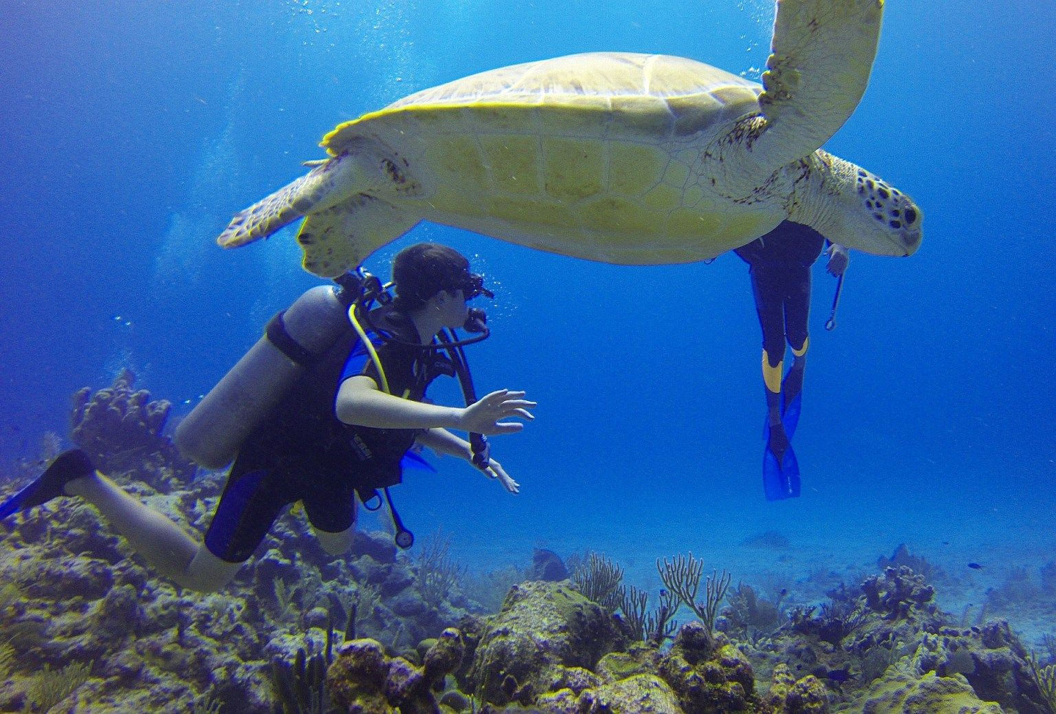 Top 5 Reasons Why You Should Try Scuba Diving In Goa
