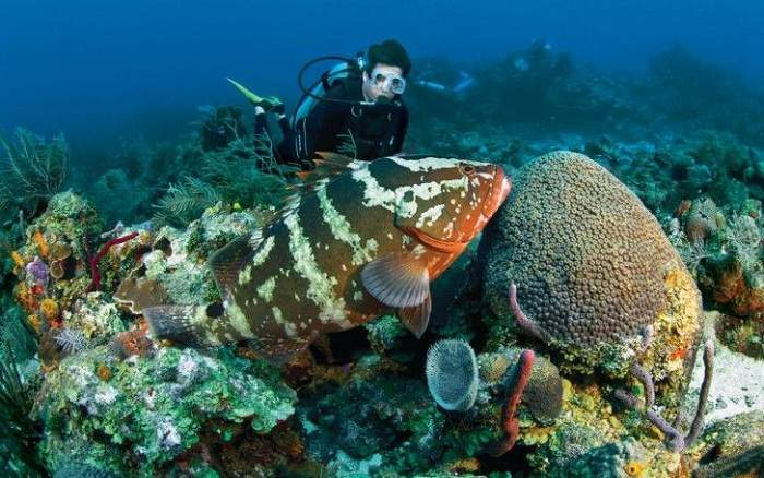 Best Experience Scuba Diving In Goa Before Monsoon Begins
