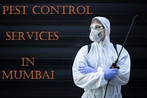 Best Pest Control Services in Mumbai
